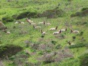 tule-elk-area