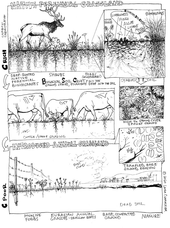 BSC-prairie-grazing-page