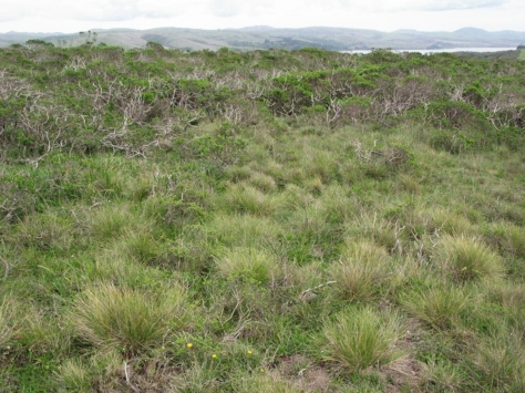 Festuca-idahoensis-prairie-relict